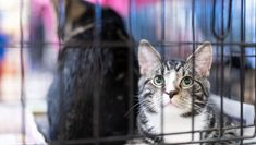 With so many humans giving of their time to rescues, companion animals will begin getting adopted in record numbers. The shelters will need fewer volunteers, and we people can go back to finding other ways to keep grounded and sane. Cat Facts, Shelters, Volunteers, Animal Shelter, Numbers, Adoption, Cute Animals, Pets, People