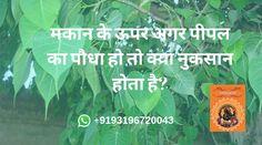 पीपल, को हिन्दू धर्म में बहुत खास माना जाता है। शास्त्रों के अनुसार, पीपल देववृक्ष है जिसपर साक्षात् ब्रह्मा, विष्णु और महेश का वास है। स्कन्द पुराण के अनुसार, पीपल के पेड़ के मूल में विष्णु, तने में केशव, शाखाओं में नारायण, पत्तों में श्रीहरि और फलों में सभी देवताओं का वास है। धार्मिक रूप से इस पेड़ को बहुत खास माना जाता है। हिन्दू धर्म के कई बड़े पर्वों में इस वृक्ष के पूजन का विधान है। शनि देव के कोप से बचने के लिए भी पीपल के पेड़ का पूजन किया जाता है।   शास्त्रों में बताया गया है, की पीपल का…