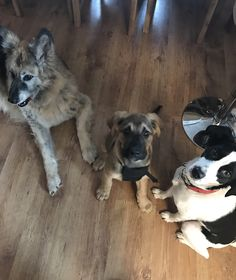 Hunde Foto: Kerstin und Kira, Zeus und Kemi - 12 Pfoten zum Glücklichsein Hier Dein Bild hochladen: http://ichliebehunde.com/hund-des-tages  #hund #hunde #hundebild #hundebilder #dog #dogs #dogfun  #dogpic #dogpictures