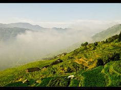 August Month, Rice Terraces, Fields, Harvest, China, Mountains, Nature, Travel, Month Of August