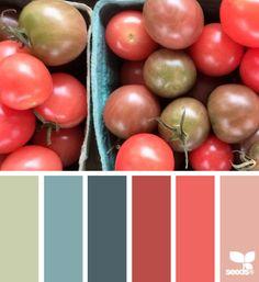 tomato hues