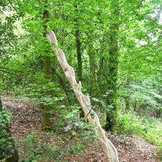 """Das Fließen der natürlichen Abläufe lässt sich in den Augenblicken der menschlichen Anwesenheit im Wald nur erahnen. Wir bräuchten einen geistigen """"Zeitraffer"""" oder eine Empathie, die zu erlernen, uns wohl noch nicht gelungen ist."""