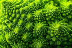 Növények geometriai formával