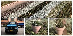 High-quality artificial  flowers SUCCULENT has been loaded and shipped