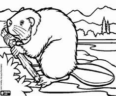 A beaver with wood for the dam coloring page