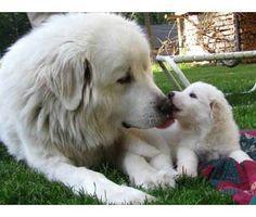 Bond of mom  & pup