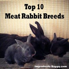top 10 meat rabbits breeds: Rabbits are the one thing I couldn't raise and then butcher.