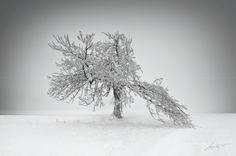 The Tree by Marek Kijevský on 500px