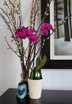 Deep Purple Orchid in Living Room