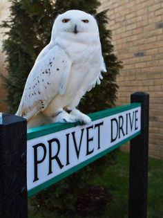 I wonder if the residences of Privet Drive get annoyed by us fans....had no idea it really exists, MUST go