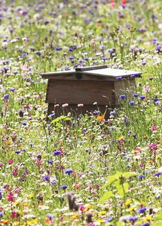 "A beehive nestled among the wildflowers. Give us a ""bee-utiful"" in the comments below if you love bees! Bee Facts, Bee Skep, Bee Hives, Buzzy Bee, Bee Friendly, Save The Bees, Bee Happy, Bees Knees, Queen Bees"