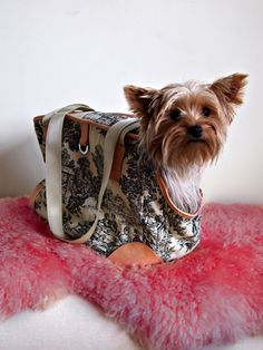 27 Best Chic Dog Carriers Images Pet Carriers Dog Dog Bag
