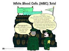 wbc count lab values - wbc lab values . normal wbc count lab values . wbc count lab values . wbc differential lab values Nursing Labs, Nursing Study Tips, Nursing Career, Lpn Nursing, Nursing Board, Medical Surgical Nursing, Lab Values, Pharmacology Nursing, Nursing Assessment