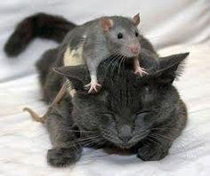 Kinderverhaal over poezen en muizen! Klik op de foto om verder te lezen...