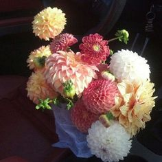 Dahlias - fall flowers