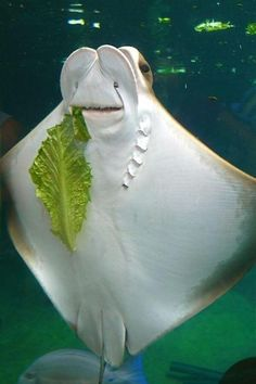 Happy Stingray (do I have spinach in my teeth?)