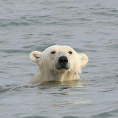 Polar Swim