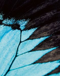 Vertical Blue Butterfly Wing Nature Photography Fine Art Macro Close Up Raw Insect Art Organic Texture UK £12
