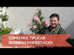 Aprenda a Plantar sua Hortinha em Vasos (Infográfico e Vídeo Explicativo) | Somos Verdes