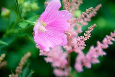 Vaaleanpunaisia nurkkauksia - Kasvihormoni   Lily.fi