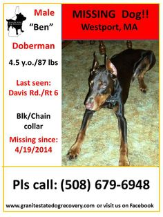 "Missing since 4/19/2014 - Westport, MA - ""Ben"" is a 4.5 year old, 87 lb, Male, Doberman. He was last seen on Rt 6 by Davis Rd. He is wearing a chain/black collar and a black collar with tags. He is friendly. Please share to get this handsome boy home.(djc)  Pls. Call: (508) 679-6948 or (508) 371-5581"