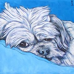 """Cookie the ShihTzu dog custom pet portrait painting in acrylics on 8""""x8"""" canvas from Pet Portraits by Bethany"""