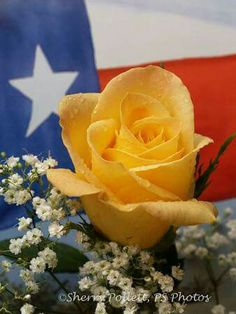Yellow Rose of Texas!!