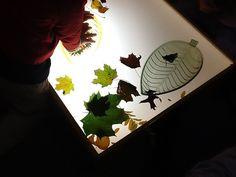 leaves & light table