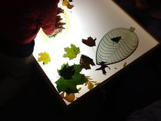 leaves & light table