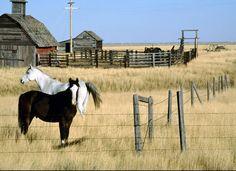 Farm_Montana