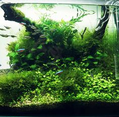 Layout by florian. #aquascaping
