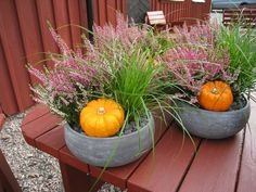 Free Image on Pixabay - Autumn Arrangement, Pumpkins Fall Containers, Build Your House, House In Nature, Passive House, Flower Pots, Flowers, Eco Friendly House, Gras, Organic Recipes