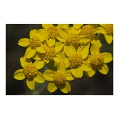 Yellow Wildflowers Poster by Florals by Fred #zazzle #gift #photogift