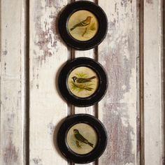 Round Vintage Bird Prints, Set of 3