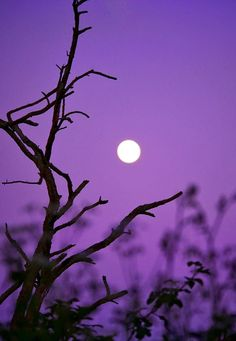 Twilight Hour by C W Hunt Mystic Moon, Twilight, All Things, Sky, Seasons, Photo And Video, Black And White, Conservatory, Purple