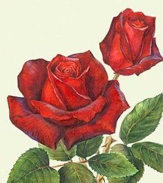 What is Your Painting Style? How do you find your own painting style? What is your painting style? Arte Floral, Watercolor Flowers, Watercolor Paintings, Rose Art, Pictures To Draw, Botanical Prints, Vintage Flowers, Painting Inspiration, Painting & Drawing