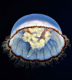 Fotos de medusas por Alexander Semenov - Antidepresivo