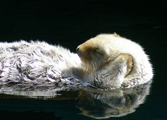 sea otter. The cuteness is almost unbearable