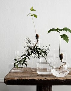 We've finally found a solution for people who love houseplants, but don't love when their feline roommates treat the fiddle leaf fig like their own personal litter box