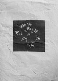Arte Floral, Aesthetic Wallpapers, Zine, Book Design, Art Inspo, Art Direction, Collage Art, Printmaking, Monochrome