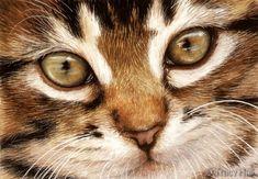 kitten pet portrait in watercolour by tracy hall