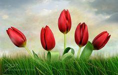 tulips tulips tulips by heavenxxxxx68. @go4fotos