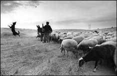 Cristina Garcia Rodero (Puertollano, 1949): 1988. SPAIN. Zamora. The afternoon roads