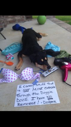 Doggy yard sale I carry stuff that is not mine outside through the doggie door. I have no remorse. – DodgerView Post