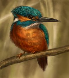 Kingfisher by Thunderbird111 on DeviantArt