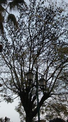 Esta es una foto tomada cerca de la Peña de Bernal en Queretaro,México 💕