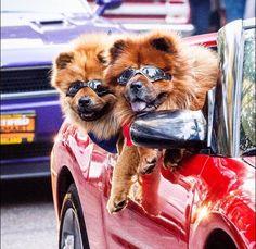 S U N B O Y E S. do a car show http://ift.tt/2ePUNsL
