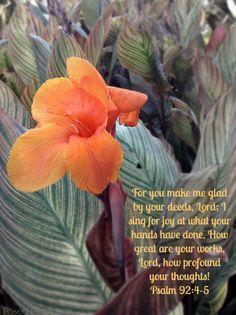 Posed Perfection: Food for the Soul ~ Psalm 92:4-5