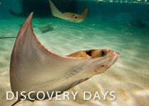 1000 Images About Virginia Aquarium Marine Science