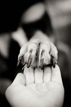 Hand & paw...I'm so going to try this.